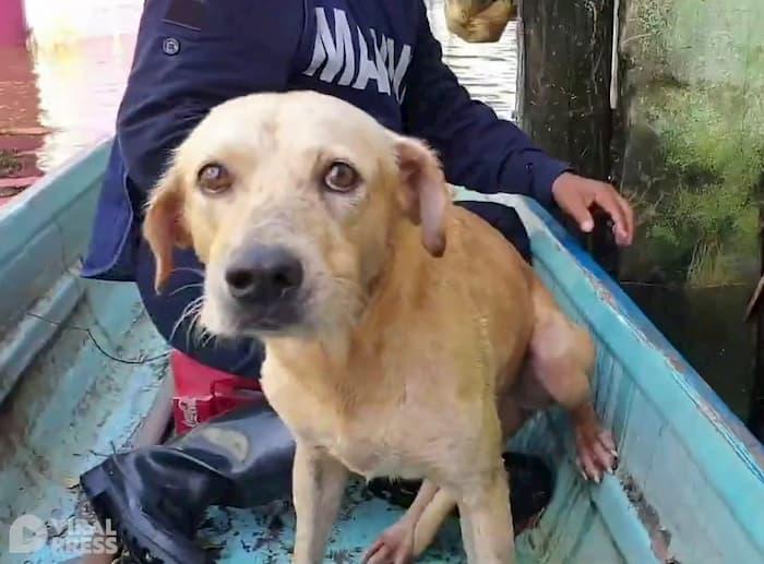 hurricane-eta-dog-rescue-2