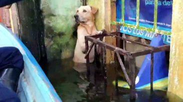 hurricane-eta-dog-rescue