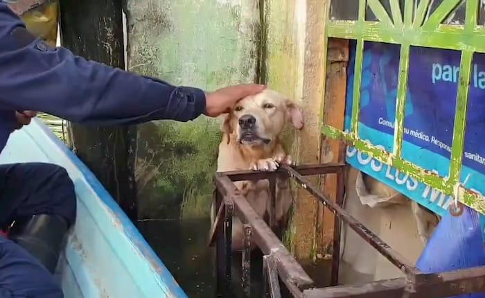 hurricane-eta-dog-rescue-4