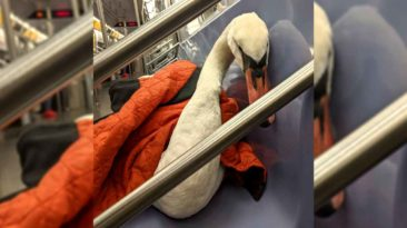 nyc-subway-swan-bae