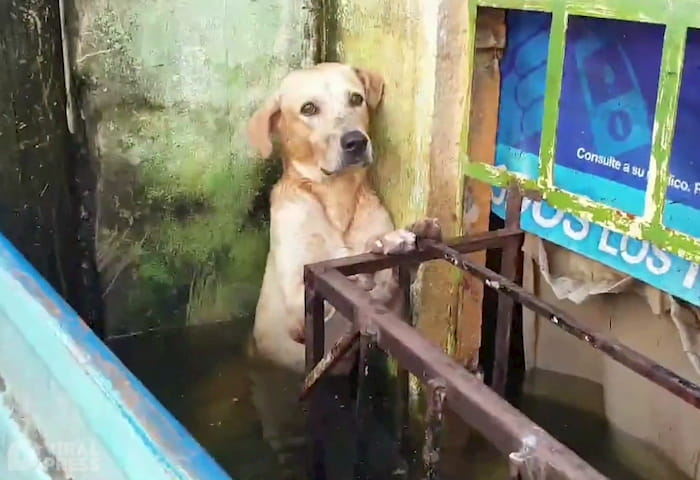 shivering-dog-rescue-3