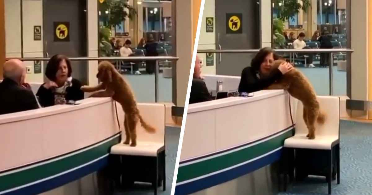 airport-dog-requests-pets