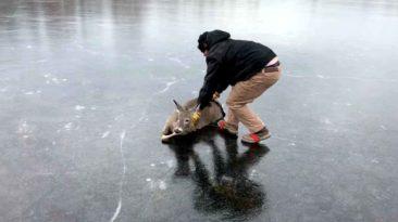 man-rescues-deer-from-frozen-lake
