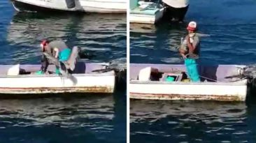 pelican-hugs-fisherman