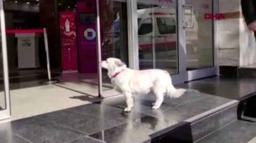 dog-waits-outside-hospital-turkey