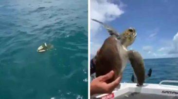 fishermen-save-turtle