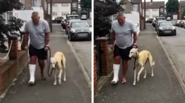 dog-imitates-owner-on-crutches