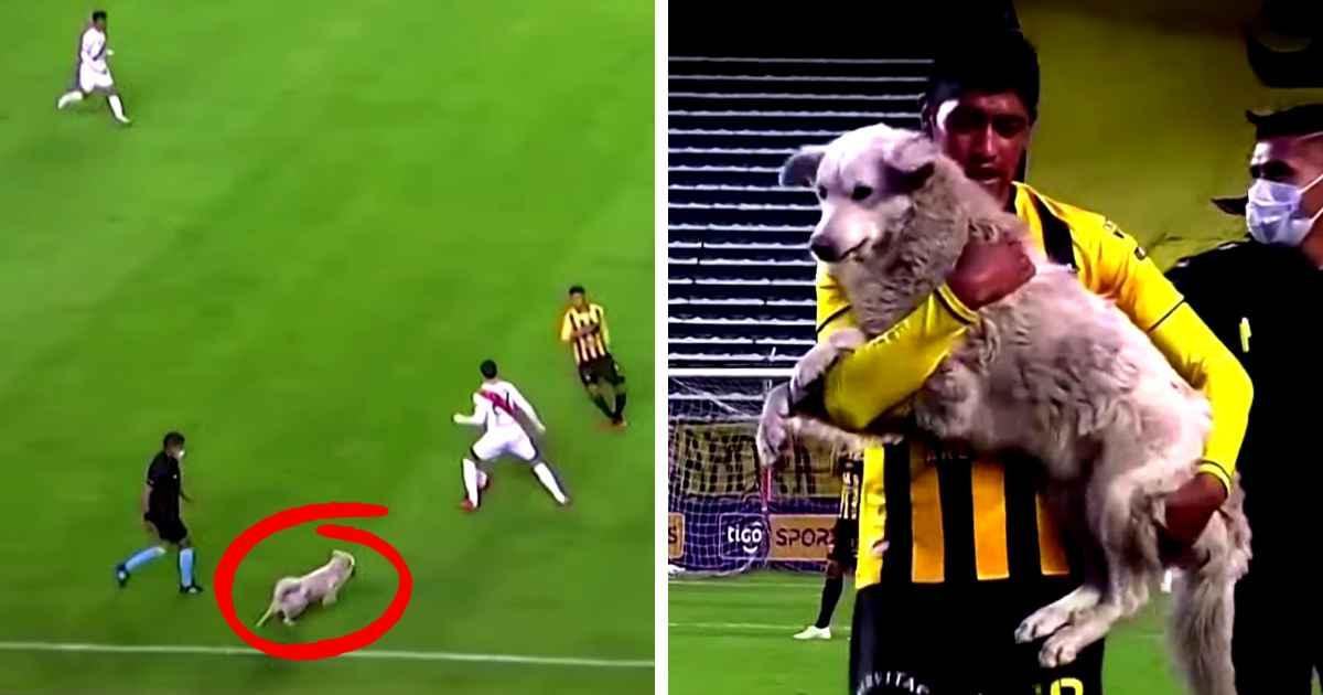 dog-interrupts-soccer-game