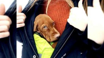 puppy-inside-jacket