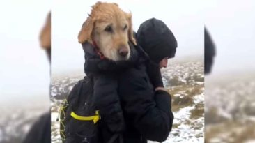 hikers-rescue-lost-dog