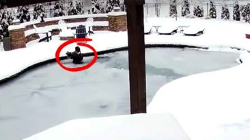woman-rescues-dog-from-frozen-pool