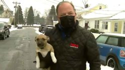 puppy-interrupts-newscast
