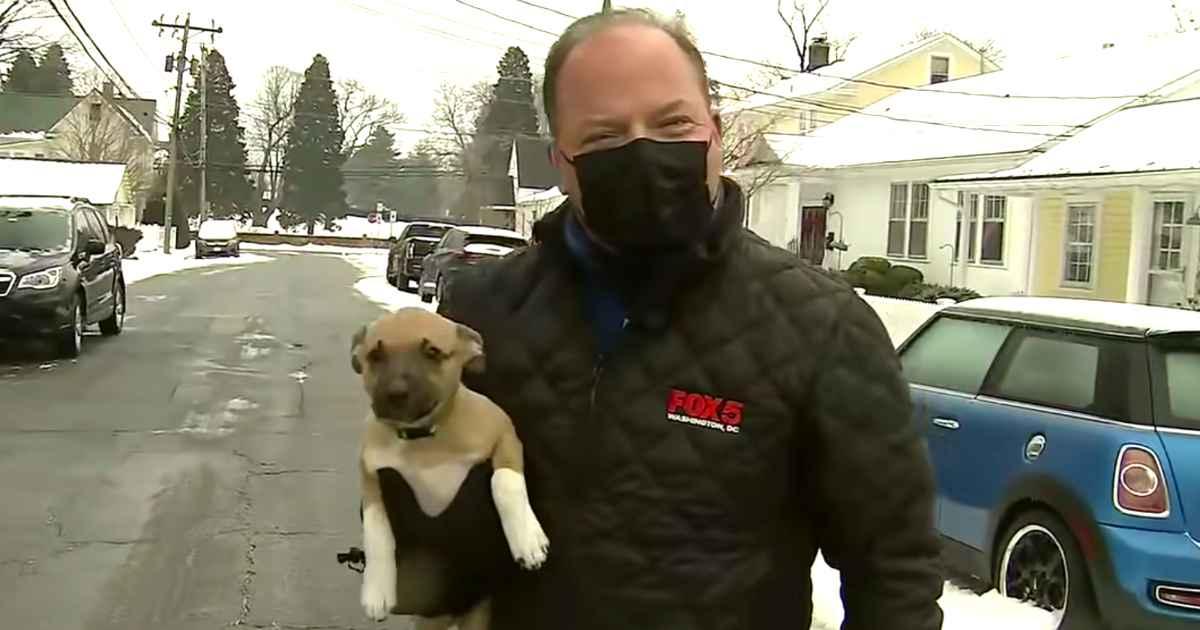 puppy-interrupts-newscast