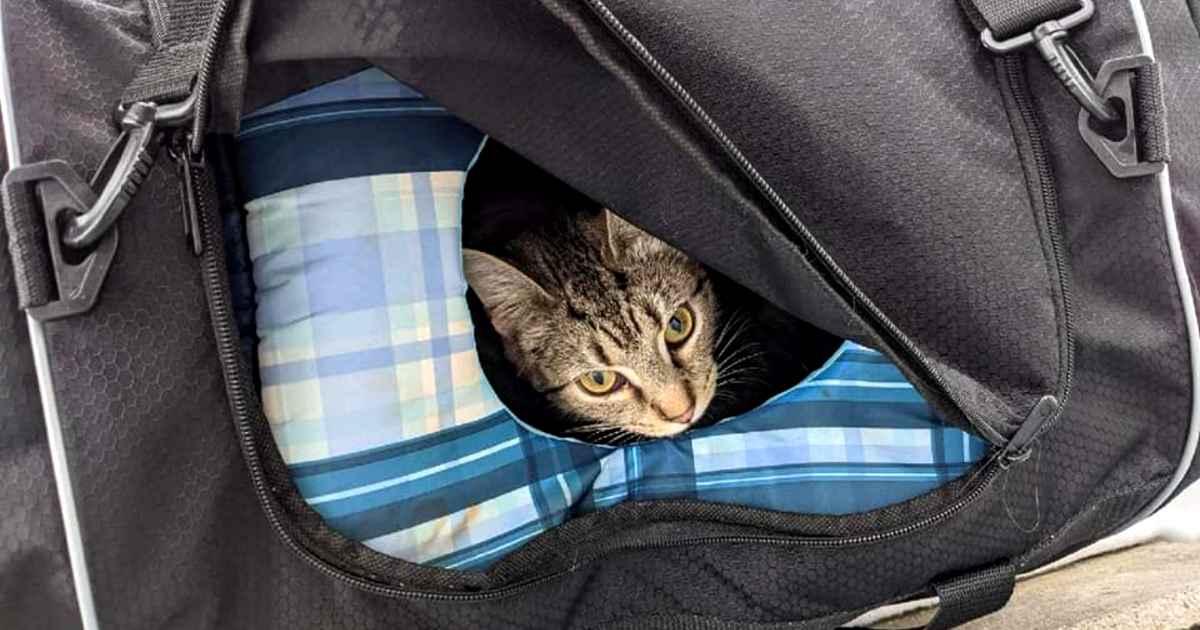 bomb-squad-finds-kittens
