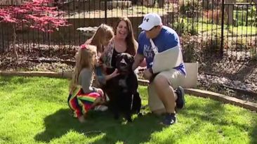 family-dog-saves-dad-from-intruder