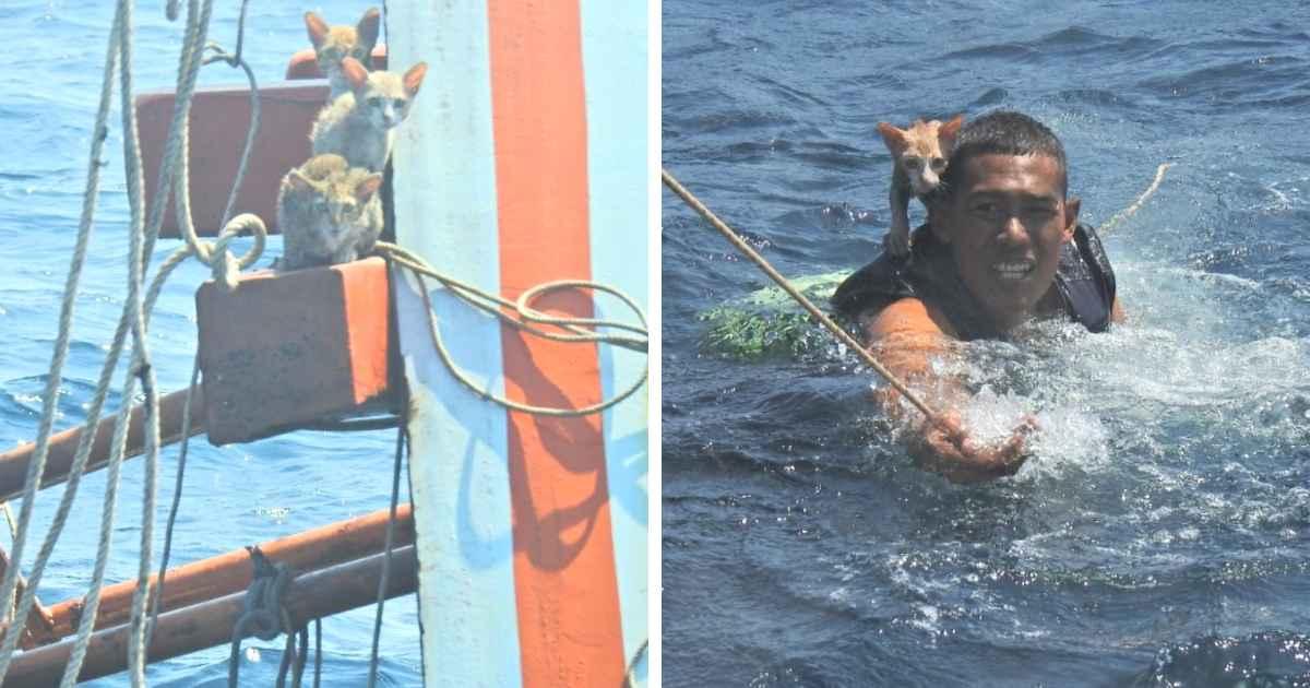 thai-sailors-rescue-cats
