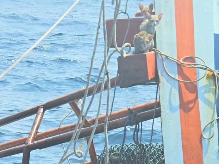 thai-sailors-rescue-cats-3
