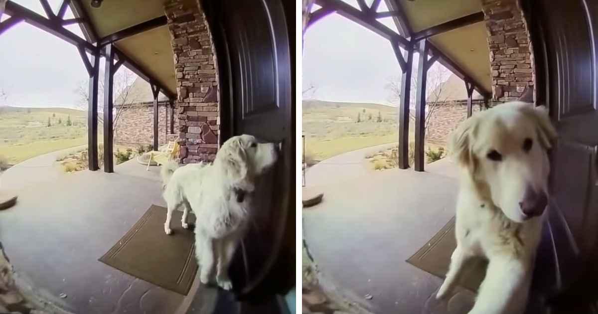 dog-uses-ring-doorbell
