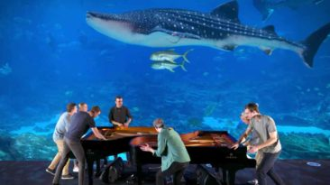 georgia-aquarium-piano-rogers-family