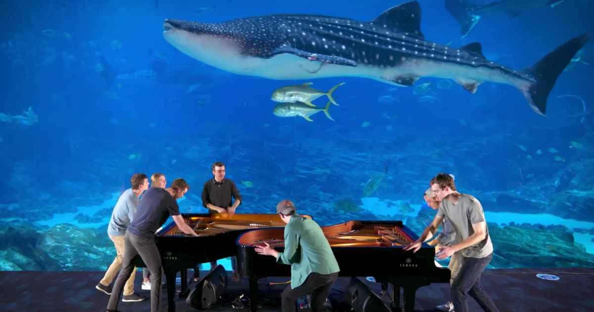 georgia-aquarium-piano-rogers-family