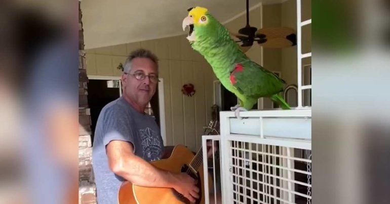 singing-parrot-tico