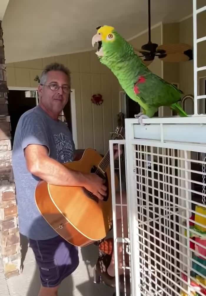 singing-parrot-tico-2
