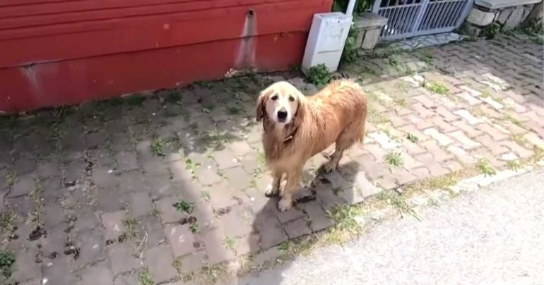 dog follows ambulance