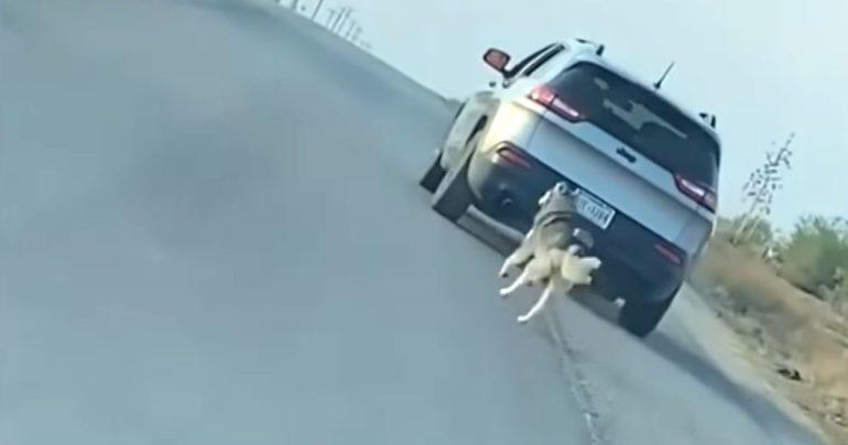 husky abandoned on road