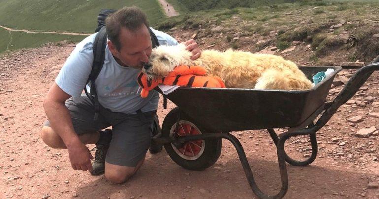 man takes dying dog up mountain
