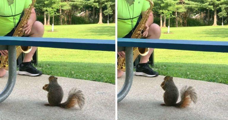 Squirrel listening to saxophone