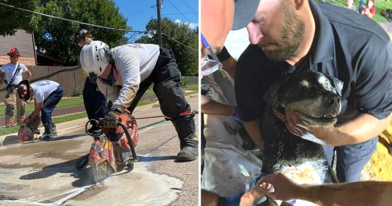 firefighters rescue blind dog