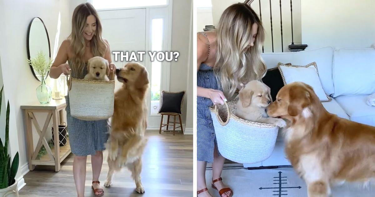 dog meets baby Tucker Budzyn