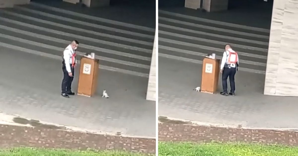 kitten plays with security guard