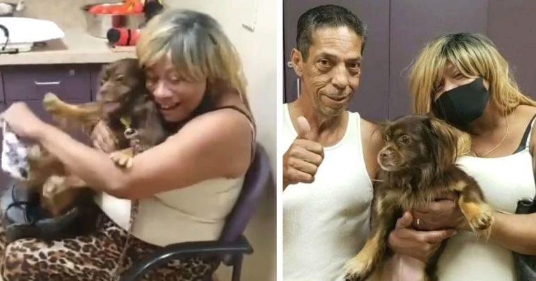 missing dog found on tv news