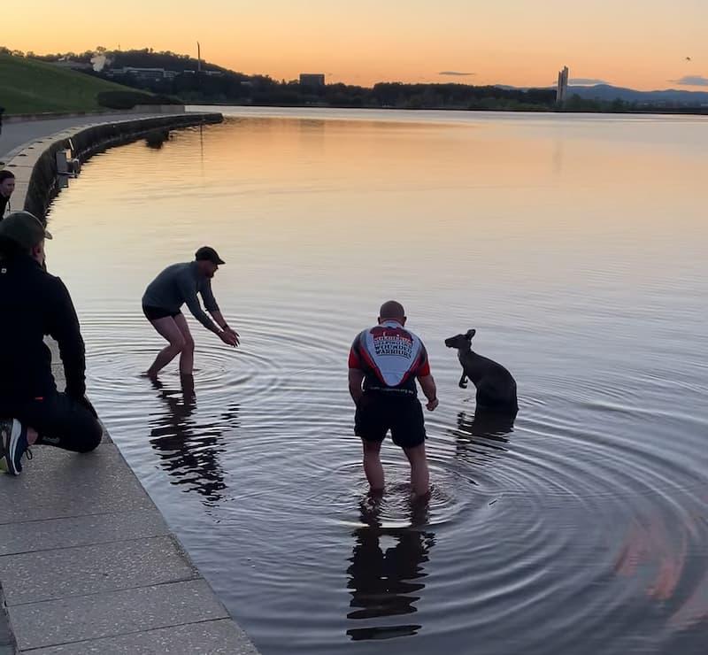 kangaroo-thanks-man-after-rescue