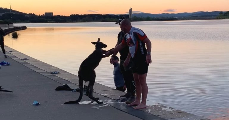 kangaroo thanks man