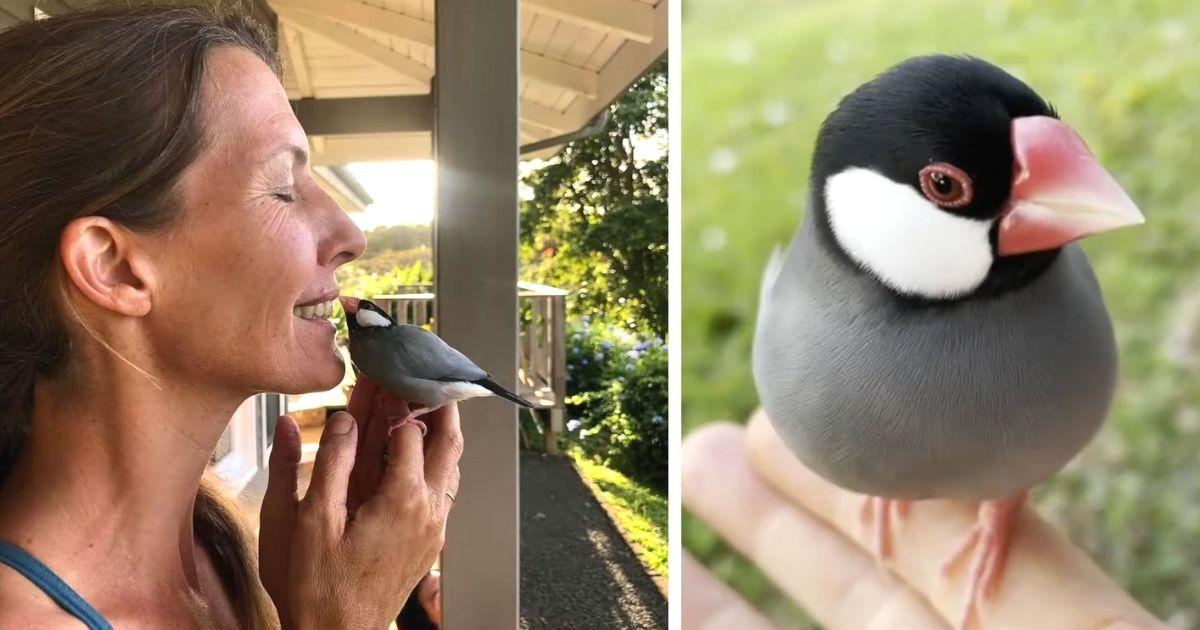 bird visits woman every morning