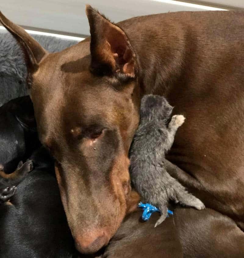 dog-adopts-kitten