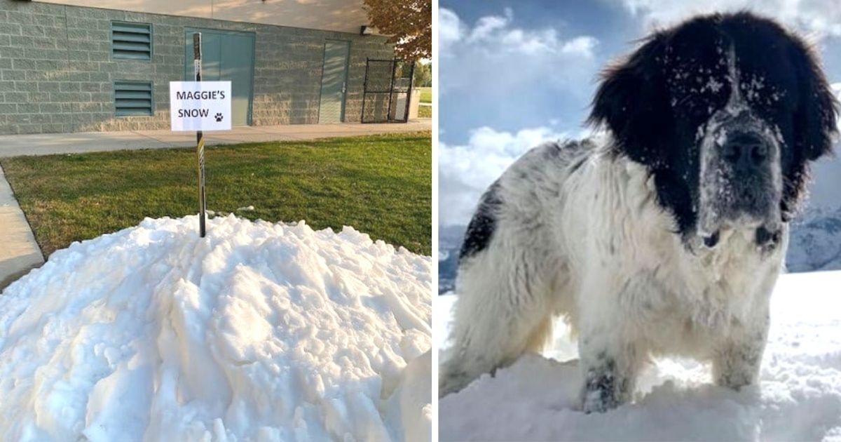 dying-dog-last-snowbank