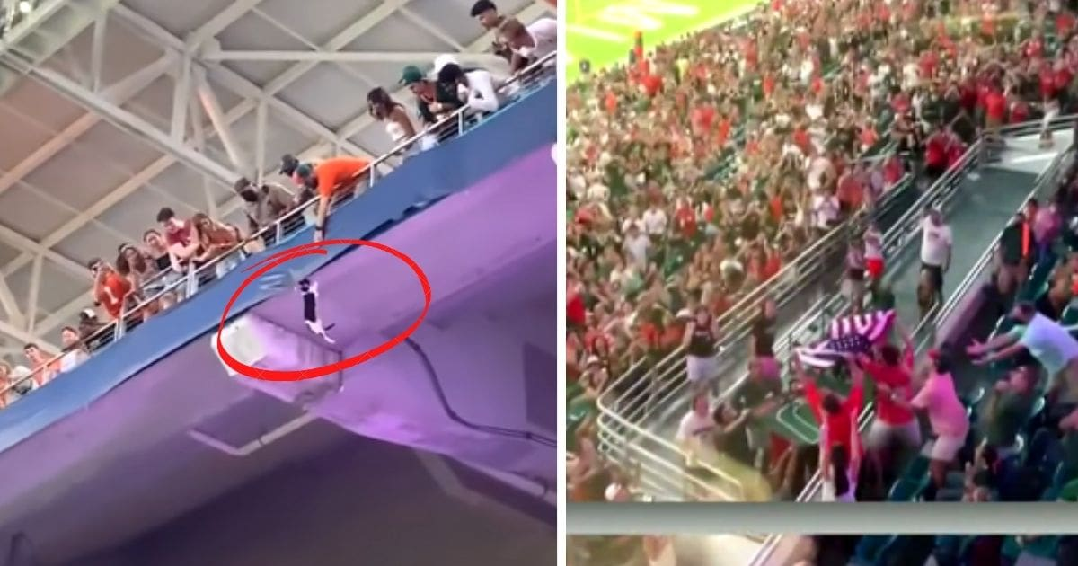 miami fans catch falling cat