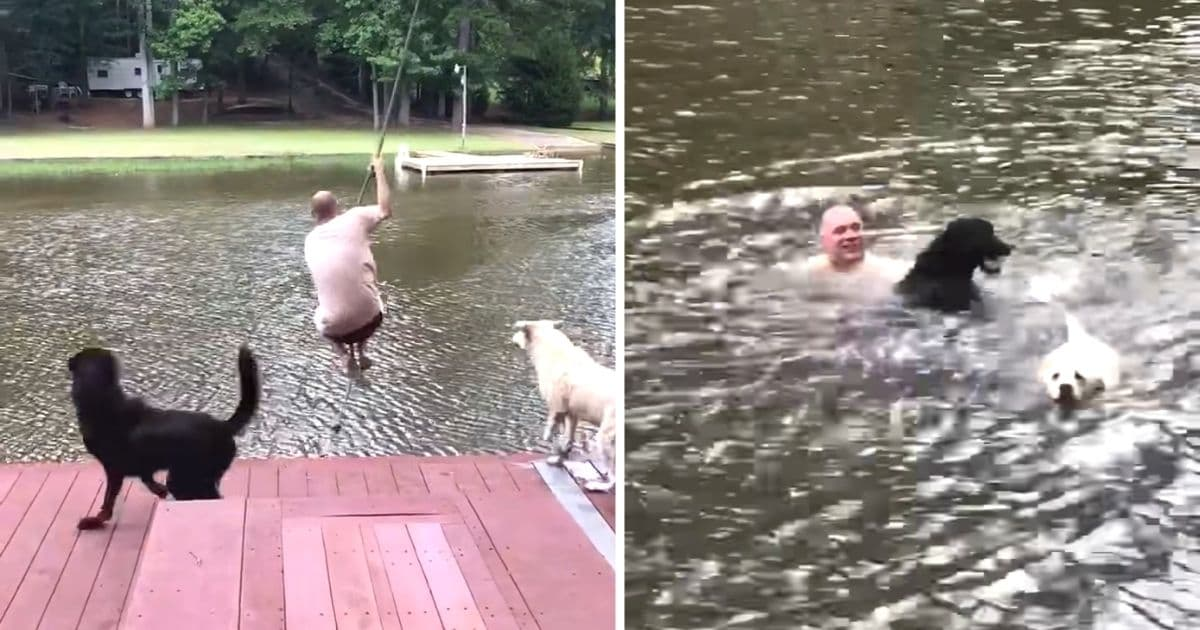 dogs rescue owner