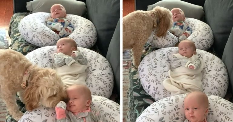dog and triplets