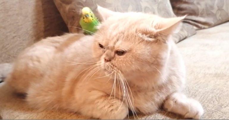 cat parrot friendship