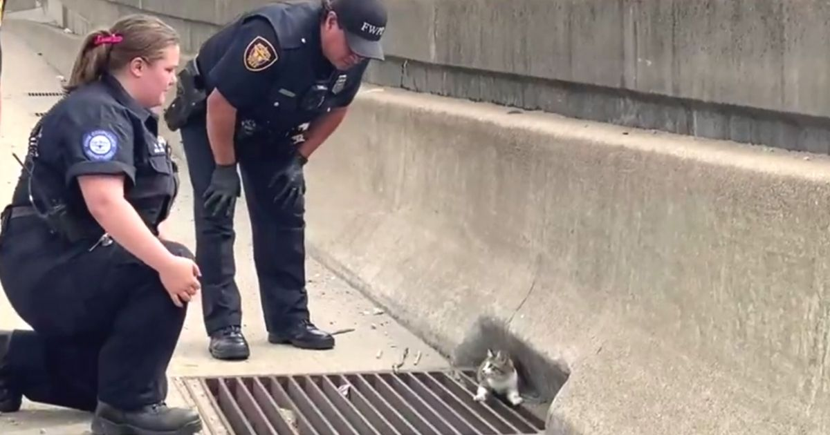 officers rescue kitten