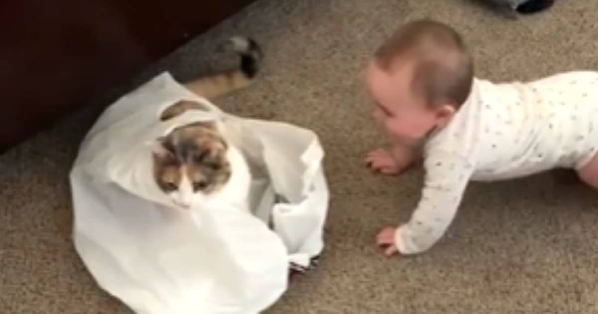 Baby Cat laugh