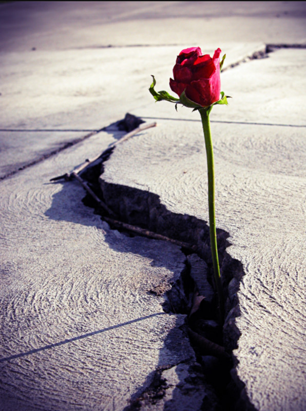 A ROSE THAT GREW FROM CONCRETE - FilmFreeway
