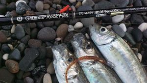GLAMOUR ROCK FISH GRF TX74MH