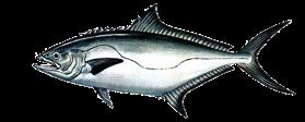 Leerfish (Garrick)