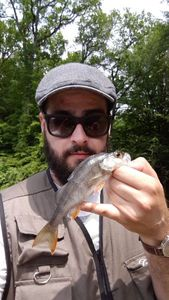 European Perch — Spyder Fish