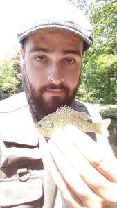 Green Sunfish — Spyder Fish